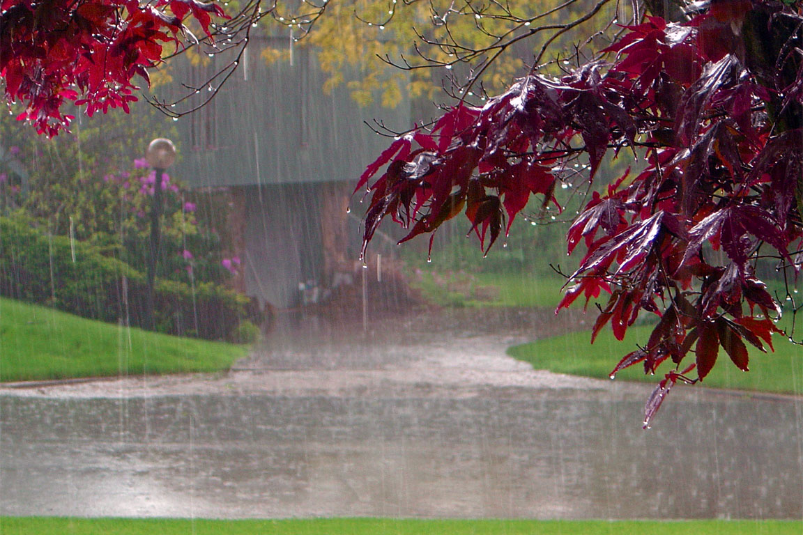 pioggia-odore-olfatto