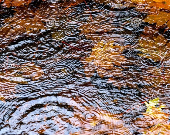 http://www.dreamstime.com/royalty-free-stock-image-autumn-rain-puddle-image27242516